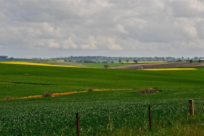Opp. Hayes' farm ruins-2